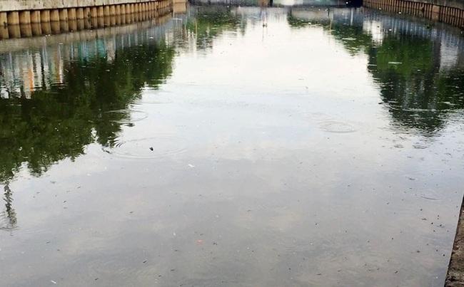 Cá chép, cá rô nổi đầy kênh Nhiêu Lộc - Thị Nghè