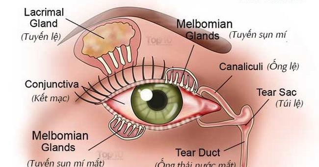 Cách giảm triệu chứng khô mắt tự nhiên: Anh, chị em nào làm văn phòng cũng nên biết