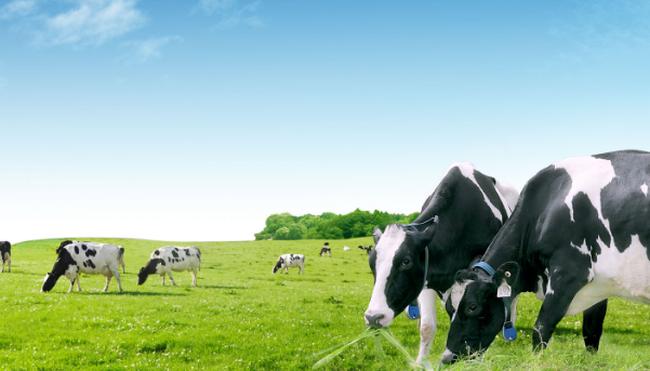 Điều kiện thị trường không phù hợp F&N Dairy chưa mua được thêm cổ phần Vinamilk - ảnh 1
