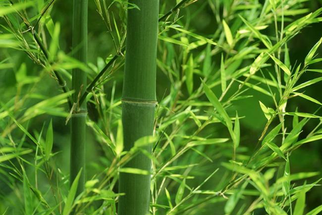 Bamboo Capital: 6 tháng lãi hơn 25 tỷ đồng, mới hoàn thành 31% chỉ tiêu LNST cả năm 2017