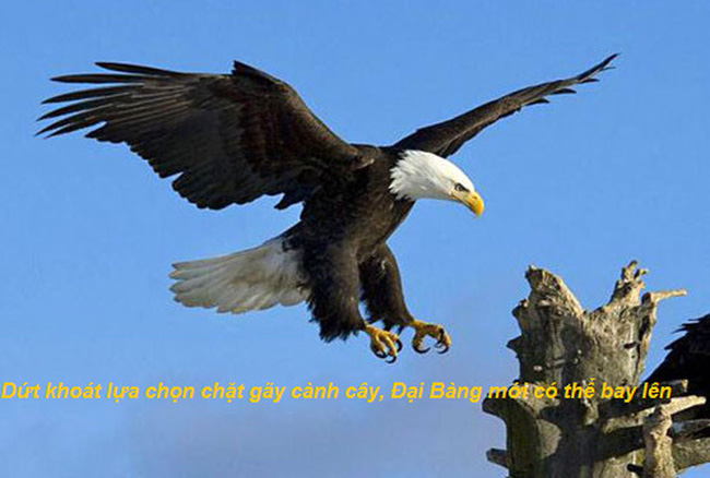 Chuyện cuối tuần: Chỉ đơn giản là cắt cành cây nơi con chim đậu, Đại Bàng sẽ bay lên