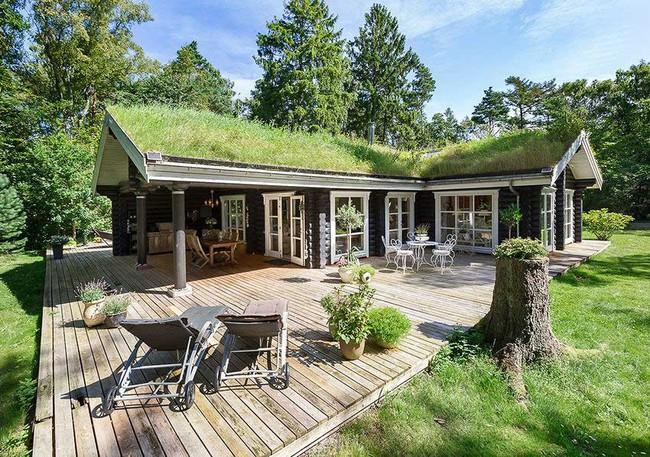 Lạc bước vào ngôi nhà gỗ đẹp như mơ giữa rừng
