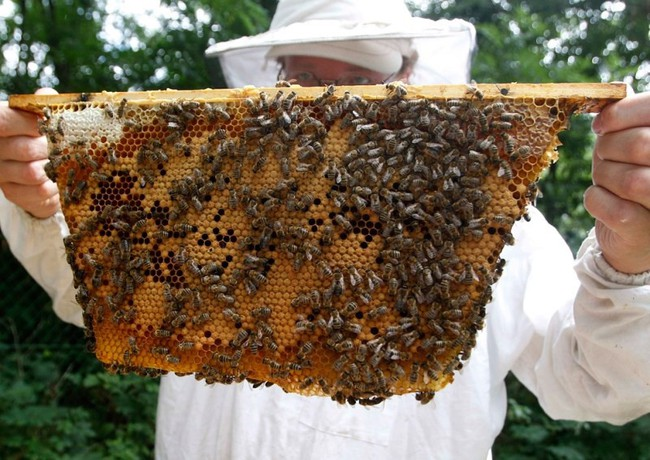 Những 'sai lầm' khiến mật ong Việt Nam xuất ngoại kém