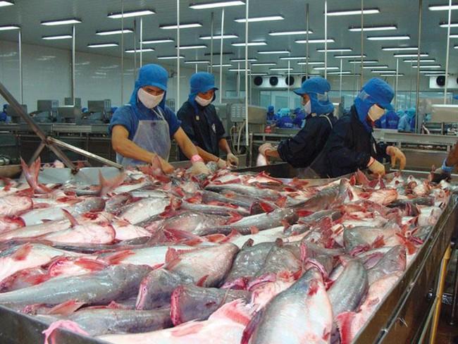 """Thủy sản Vĩnh Hoàn đã trích lập dự phòng 50% cho khoản công nợ gần 60.000 USD """"bị quỵt"""""""