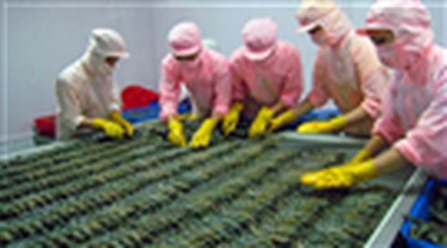 Doanh nghiệp Việt gặp khó vì quy định cấm nhập khẩu tôm của Úc