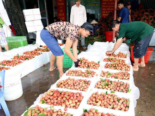 Quả vải Bắc Giang được tiêu thụ mạnh tại thị trường Trung Quốc