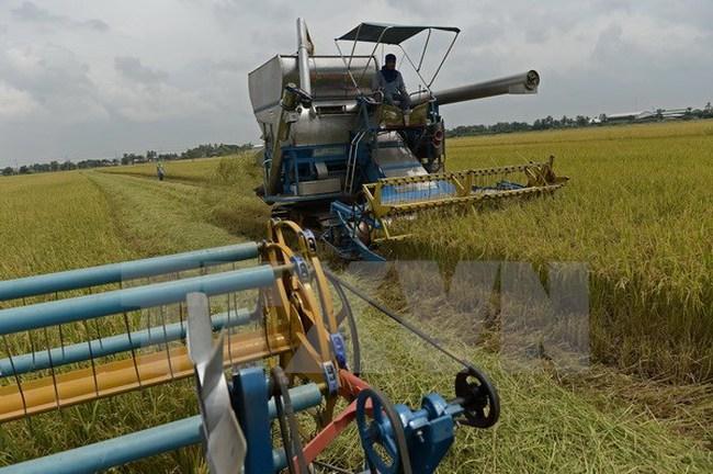 Thái Lan bán đấu giá gần 3 tấn gạo trong kho của chính phủ