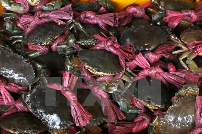 Giá cua biển thương phẩm tại tỉnh Trà Vinh tiếp tục tăng cao