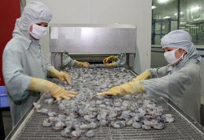 Con tôm có thể mang về 10 tỷ USD mỗi năm cho Việt Nam