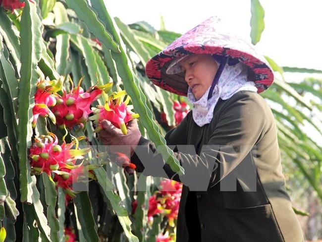 Giải bài toán tìm đầu ra cho các mặt hàng nông sản Việt Nam