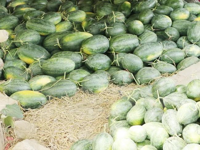 Giá thấp kỷ lục, người trồng dưa Quảng Ngãi điêu đứng