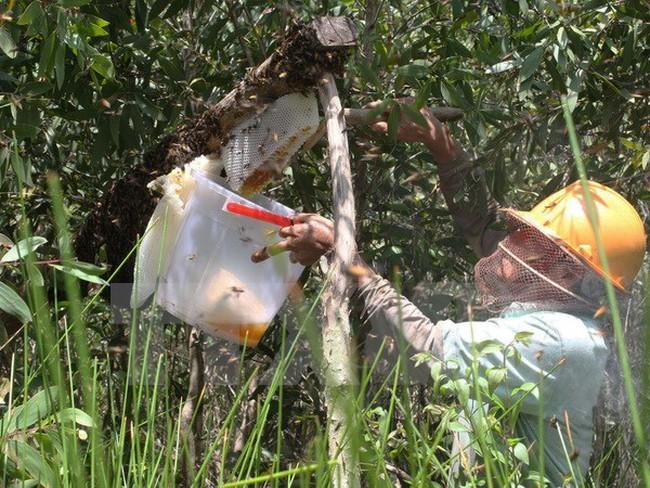 Xuất hiện mật ong không rõ nguồn gốc lấy thương hiệu U Minh hạ