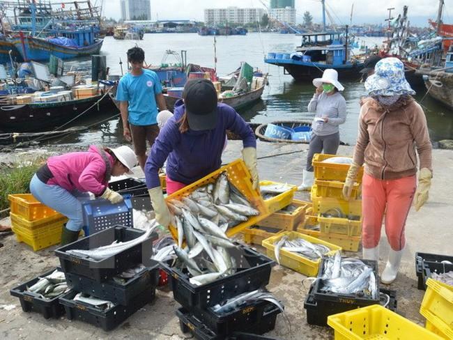 """Hải sản Việt Nam nỗ lực trở lại """"thẻ xanh"""" ở thị trường EU"""