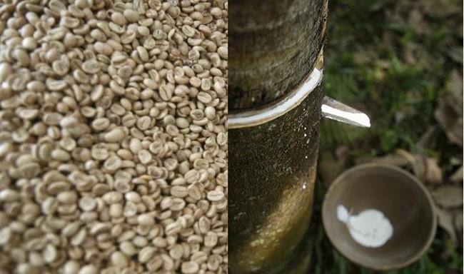 Giá đường và cà phê rủ nhau tăng, cao su và gạo đi xuống