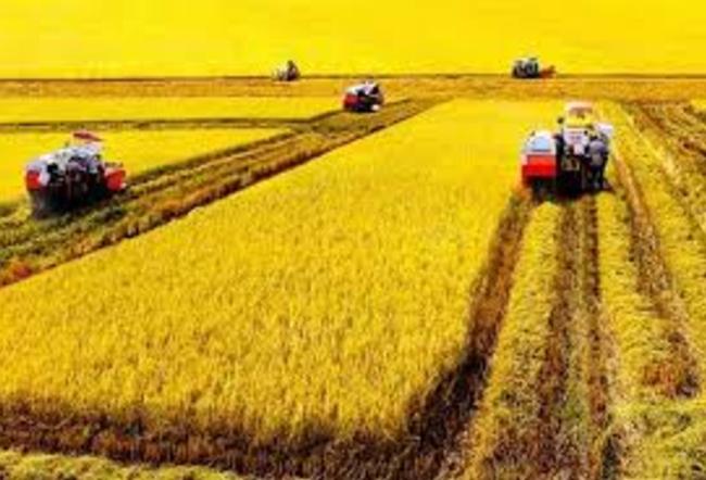 Nông nghiệp trở lại đường đua