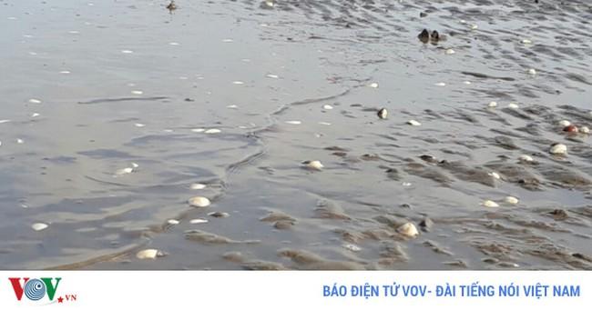 Cá, nghêu chết hàng loạt ở Kiên Giang