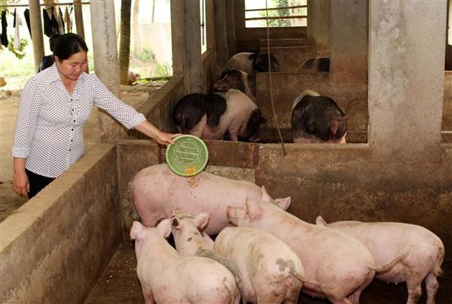 """Ngành ngân hàng vào cuộc """"giải cứu"""" ngành chăn nuôi lợn"""