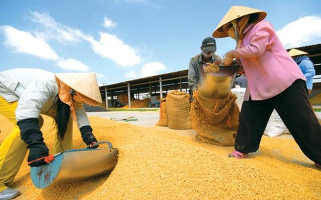 Trung Quốc tăng thuế nhập khẩu gạo nếp