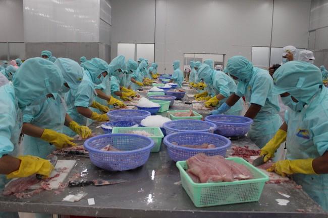 Xuất khẩu cá tra sang Tây Ban Nha giảm tới hơn 70%