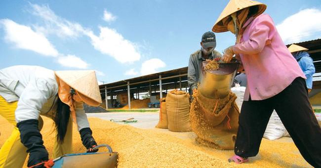 """""""Xuất khẩu giá thấp, nhập khẩu giá cao"""", đau đầu câu chuyện hạt gạo Việt Nam"""