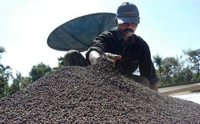 """Hồ Tiêu Việt Nam """"thất thế"""" tại thị trường Hà Lan"""