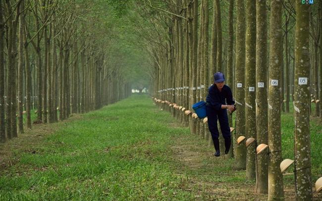Cao su Tây Ninh (TRC): LNST 9 tháng đạt 54 tỷ đồng, giảm 39% so với cùng kỳ - ảnh 1