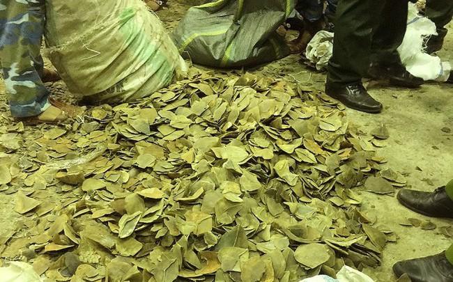 Hải quan Đà Nẵng bắt giữ khoảng 6 tấn vảy tê tê và 2 tấn ngà voi buôn lậu