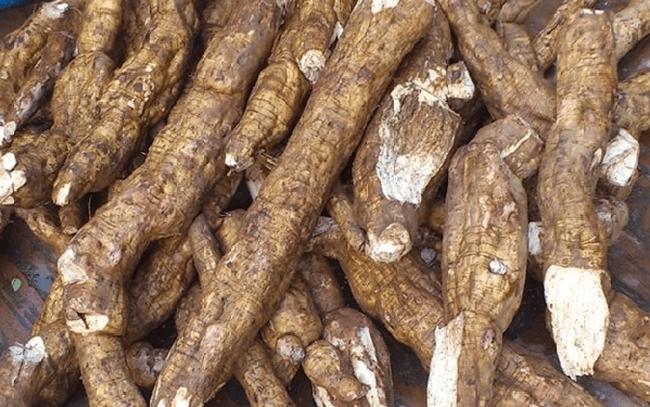 Xuất khẩu sắn và sản phẩm từ sắn tăng mạnh cả về lượng và giá trị
