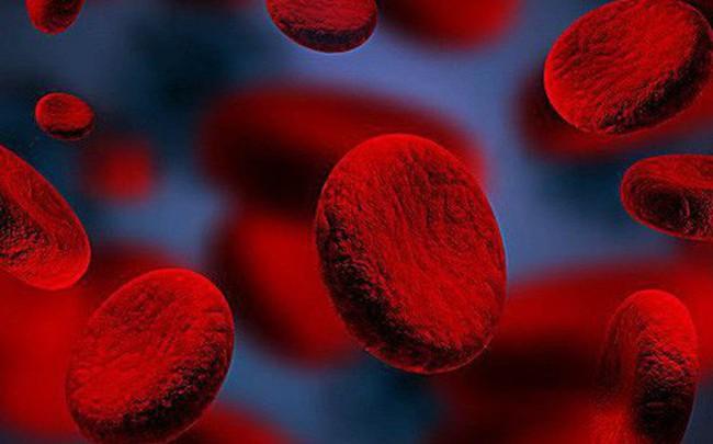 Máu là gốc của sự sống: Những thực phẩm bổ máu tốt nhất bạn nên ăn mỗi ngày để phòng bệnh