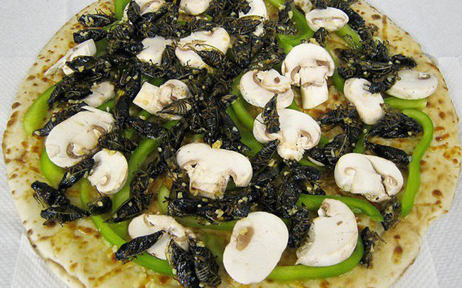 Sững sờ với những chiếc pizza kì dị nhất trên thế giới, có cả loại nhân... ve sầu và chuột lang