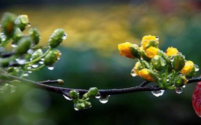 Thời tiết ngày mùng 4 Tết: Hà Nội sáng sớm có sương mù, mưa nhỏ vài nơi