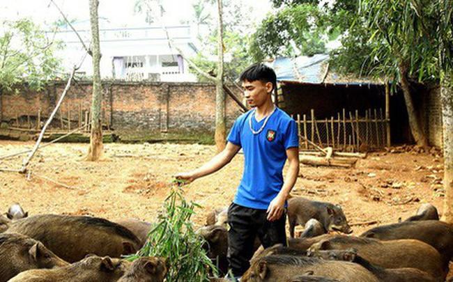 23 tuổi bỏ Đại học, về nhà nuôi lợn rừng kiếm 250 triệu đồng/năm