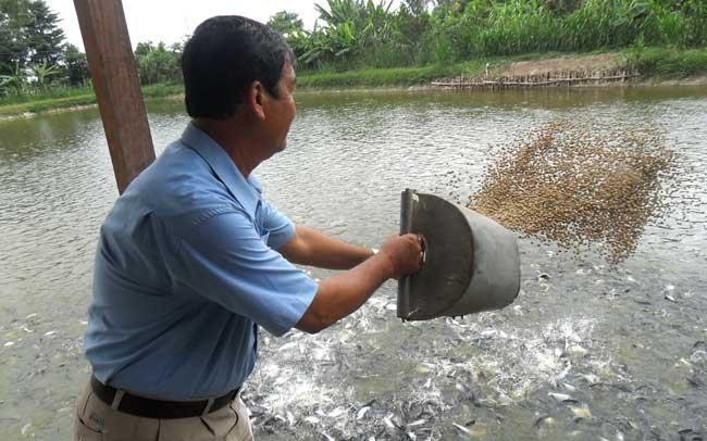 Việt Thắng Feed (VTF): Lỗ lớn năm 2017 vẫn tự tin đặt mục tiêu lãi sau thuế 459 tỷ đồng năm 2018