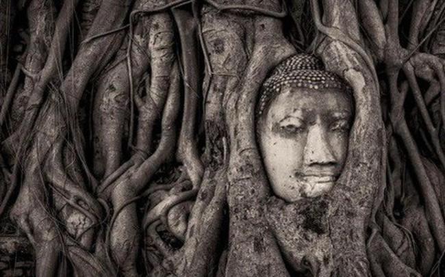 Bức tượng Phật 700 năm bị rễ cây nuốt chửng hé lộ sự tương đồng với nghệ thuật điêu khắc nổi tiếng nhất châu Âu