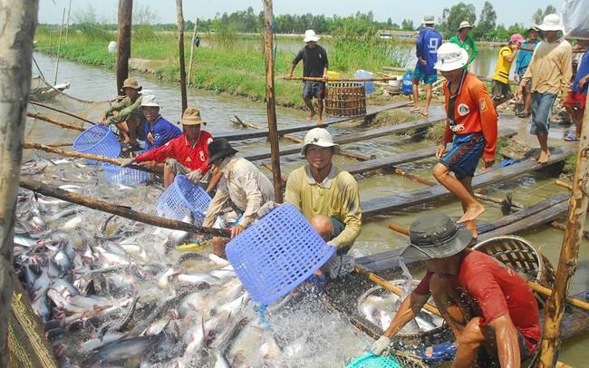 Hoa Kỳ sắp thanh tra thực tế chương trình kiểm soát cá da trơn Việt Nam