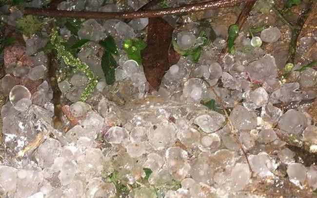 """Clip gây xôn xao: Cơn dông """"trút theo"""" mưa đá trắng trời ở Mộc Châu"""