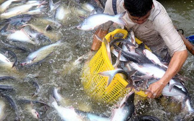 Bộ Công thương: Mỹ không khách quan, bảo hộ quá mức khi áp thuế cao chưa từng có lên cá tra Việt Nam