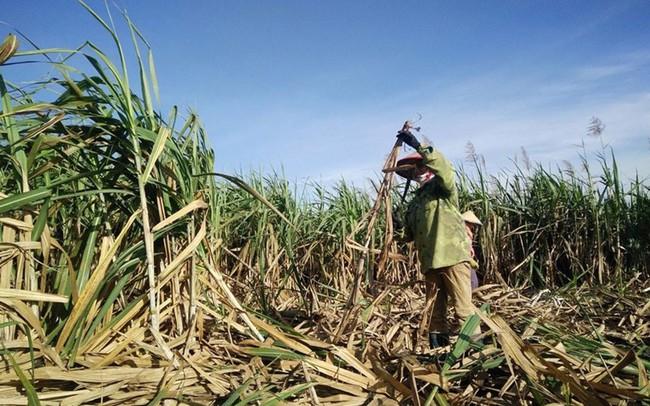 """Không thể bảo hộ ngành mía đường mà """"phớt lờ"""" quyền lợi 93 triệu dân"""