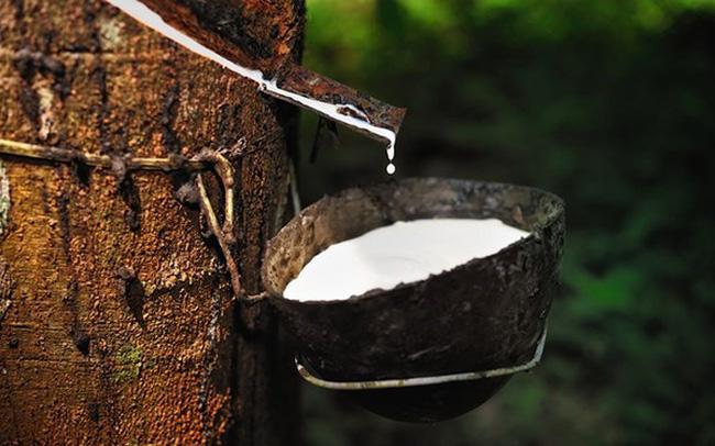 Thái Lan đẩy mạnh các biện pháp để giảm nguồn cung cao su