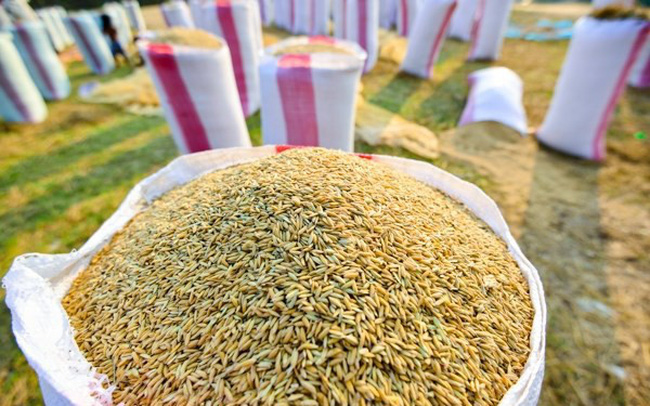 Sản lượng gạo chất lượng cao của Thái Lan giảm mạnh lần nhất trong một thập kỷ