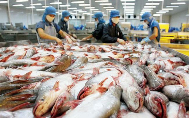 Phó Tổng thư ký Hiệp hội VASEP: Thiếu cá tra xuất khẩu cho tới ít nhất tháng 6/2018