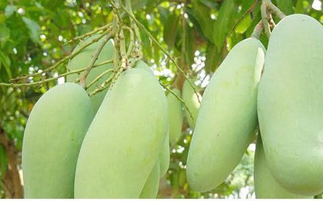 Xuất khẩu rau củ quả vẫn tăng mạnh, nhưng 93% là xuất thô và sơ chế