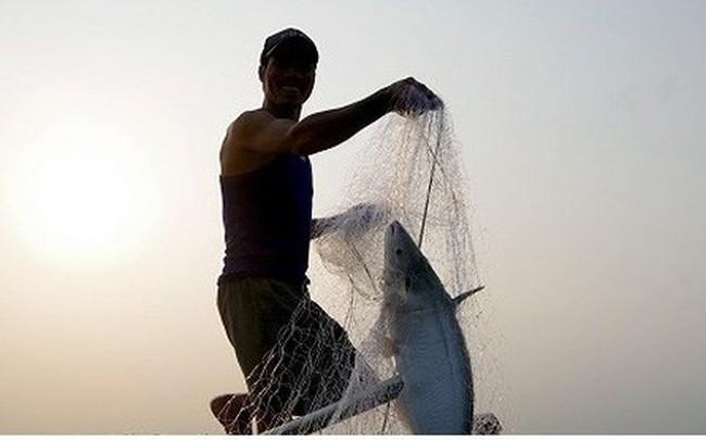 Kiếm hàng chục triệu nhờ săn cá bông lau sông Hậu