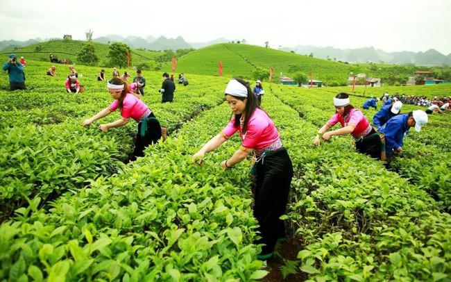 GTNfoods tiếp nối lịch sử 60 năm thành lập và phát triển của Nông Trường Sữa - Chè Mộc Châu
