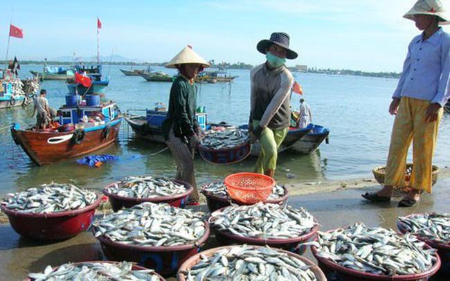 Không chỉ xuất khẩu, doanh nghiệp thủy sản kinh doanh nội địa cũng gặp khó