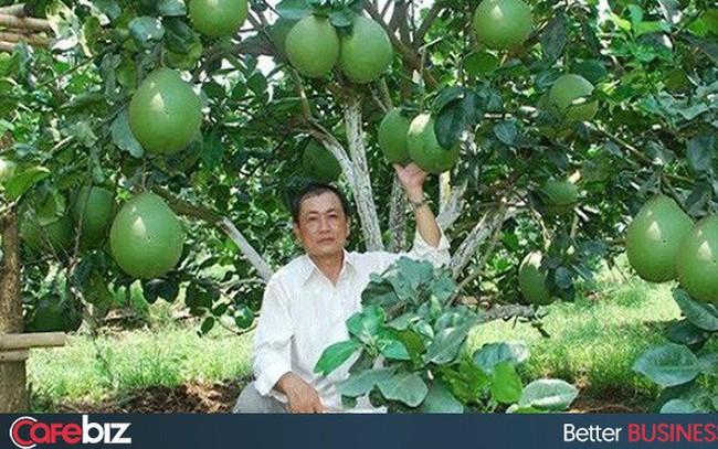 """Có """"bùa chú"""" này, người trồng cam Cao Phong, bưởi da xanh Bến Tre, hộ kinh doanh chả mực Hạ Long... sẽ thu lợi cao hơn từ đặc sản và dẹp nạn hàng giả mạo danh"""