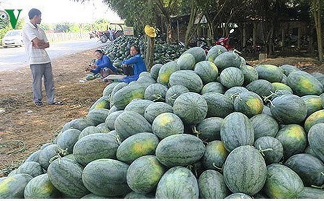 Trung Quốc dẫn đầu các quốc gia nhập khẩu rau quả của Việt Nam