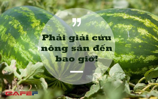 """Phó Viện trưởng Viện Khoa học Nông nghiệp Việt Nam: Người thành thị không nên tham gia """"giải cứu"""" nông sản!"""