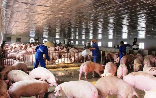 Phạt tới 200 triệu đồng nếu vi phạm hành chính lĩnh vực thức ăn chăn nuôi, thủy sản