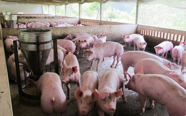 Ngân hàng đã gỡ khó cho người nuôi lợn thế nào? - ảnh 1